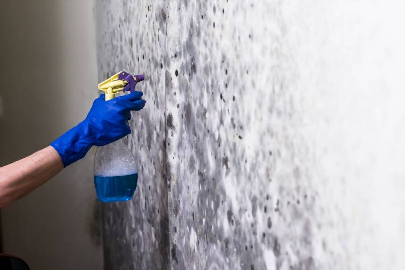 How to remove mould from your Home?